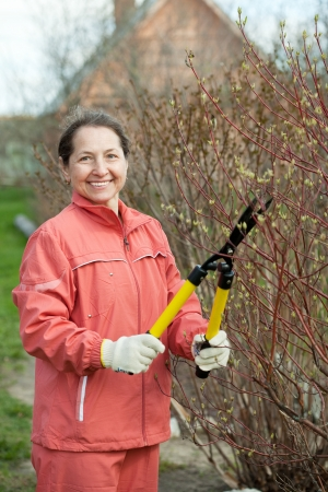 Mature woman trimmed branches in the garden in spring photo
