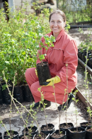 Female gardener chooses  sprouts at market Stock Photo - 13651004