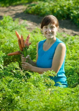 young woman is picking carrot in field photo