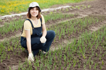 Young  woman  working in field of onion photo