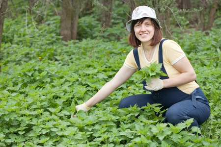gathers: Woman gathers nettle at spring garden