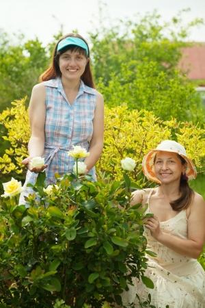 Female gardeners in rose plant at garden Stock Photo - 13800669