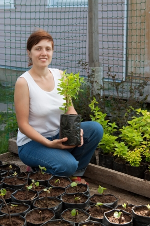 woman with sprouts  in pots  at plant photo