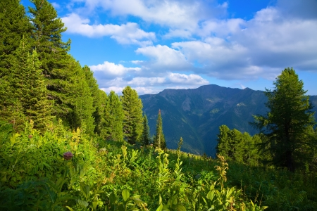 siberia: forest mountains in sunny day, Altai, Siberia
