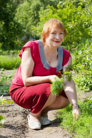 Mature woman  picking dill in garden photo