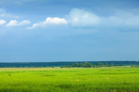 Summer landscape with green meadow under blue sky photo