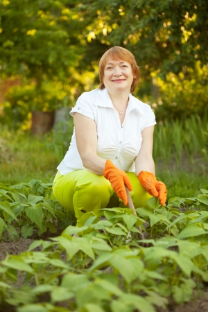 Mature woman working in field of beans photo