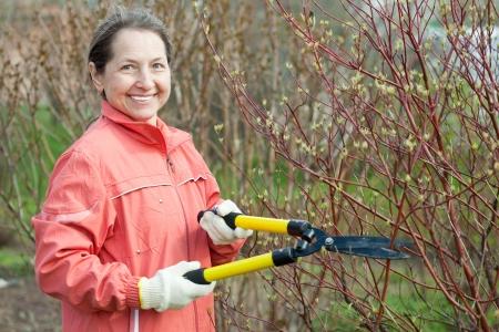 Female gardener cuts branches in the garden in spring photo