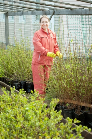 Female gardener chooses bush sprouts at market Stock Photo - 14100343