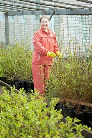 Female gardener chooses bush sprouts at market Stock Photo - 14100343