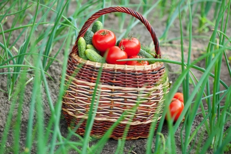 Basket of vegetables is on the ground photo