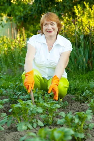 Mature woman working in field of potato photo