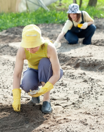 sows: Two women sows seeds in soil at garden Stock Photo