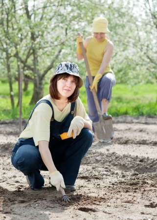 Two women works at vegetables garden in spring photo