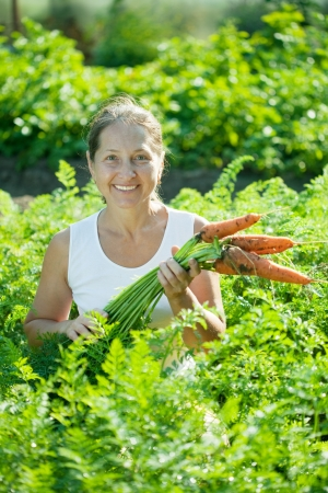 Mature woman picking fresh carrots in field photo