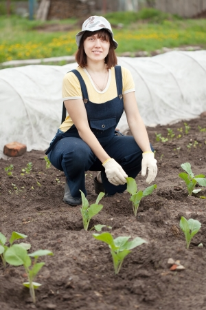 woman planting cabbage seedling in ground photo