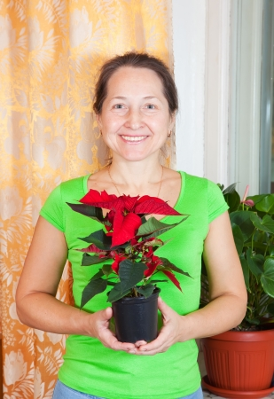 Mature woman with Poinsettia flowers in flowering pot  at her home photo