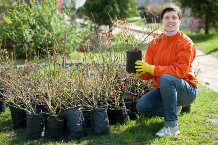 tree planting: Young woman buys roses sprouts at market