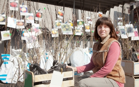 woman chooses trees sprouts at market Stock Photo - 14342043