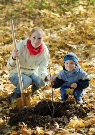 planting season: woman with  preschooler son setting tree in autumn garden