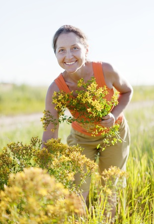 Mature woman gathers herbs at wild meadow photo