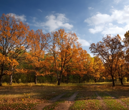 Autumn lanscape with oak grove in september photo