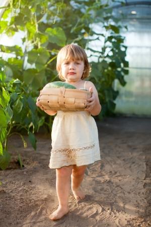 petite fille avec des concombres r�colt�s en serre Banque d'images - 14565800