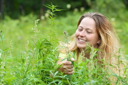 Happy woman with fresh hemp    at cannabis plant photo