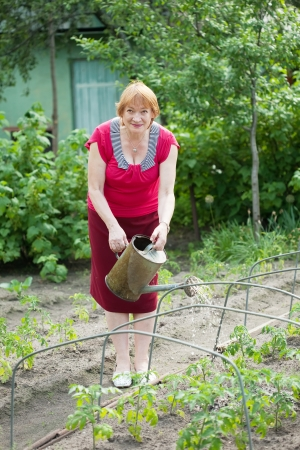 Mature woman watering vegetables plant  with  watering pot  in field photo