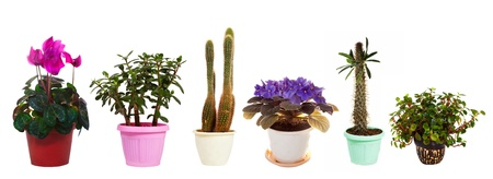 Set of houseplant in  pots. Isolated on white background photo