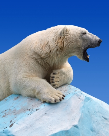 polar bear in wildness area against sky photo