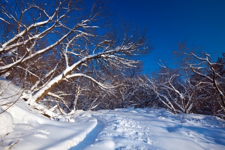 lanscape: Winter lanscape with forest in frozen day