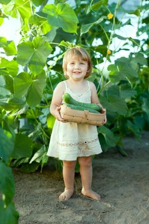 2 concombres ann�es de cueillette de l'enfant de serre Banque d'images - 15230687