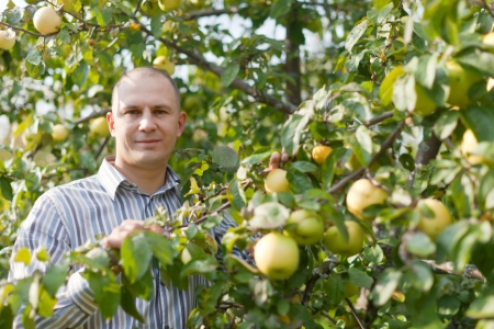 earnest: Middle-aged man surrounded by  apple trees at orchard  Stock Photo