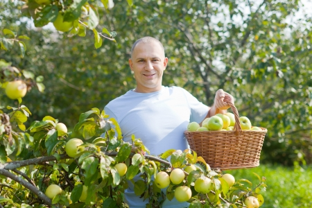 Middle-aged man surrounded by  apple trees at orchard  Stock Photo