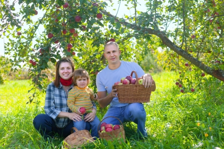 Happy  family  with apple harvest in orchard Stock Photo - 15316678