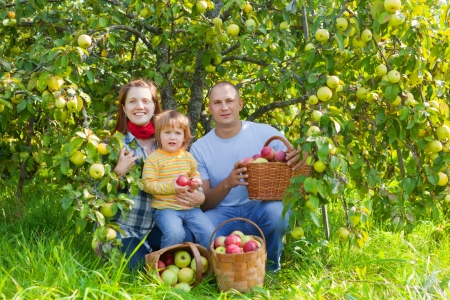 Happy parents and child with baskets of harvested apples in garden Stock Photo - 15316665