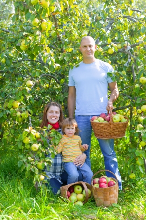 Happy  family  with apple harvest in orchard Stock Photo - 15316666