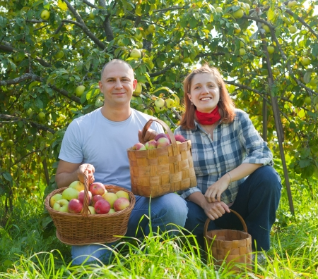 Happy couple with baskets of harvested apples in garden Stock Photo - 15360717