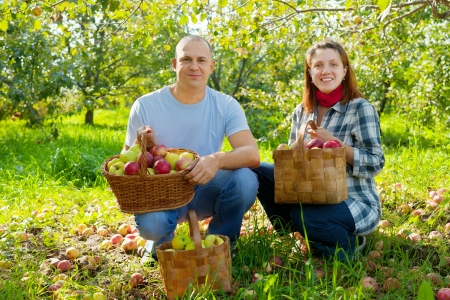 Happy couple with  harvested apples in garden photo