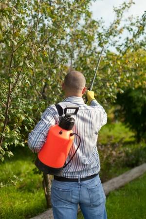 Male gardener spraying  trees with garden spray photo