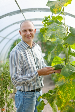Male farmer looks cucumbers plant in greenhouse photo
