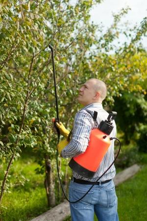 spraying: working man with garden spray  in orchard