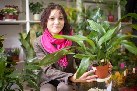 Woman chooses aspidistra in a flower shop