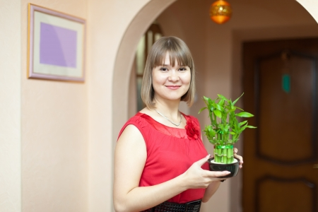 Young woman with lucky bamboo plant at office photo