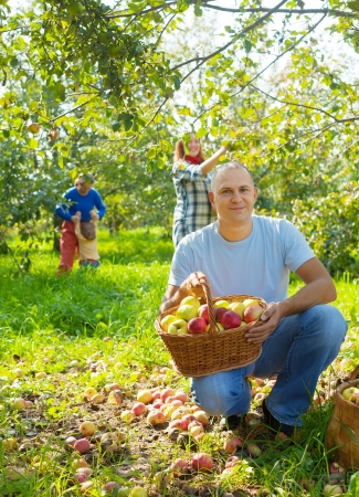 Happy family with  harvested apples in garden photo