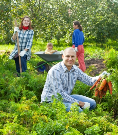Happy family is picking carrot in field photo