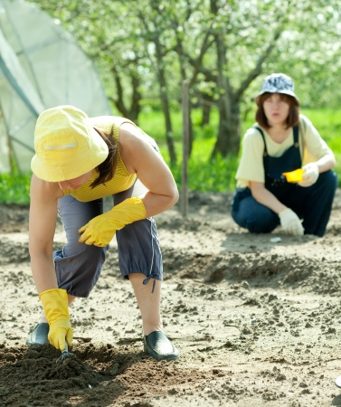 sows: Two women sows seeds in soil at field