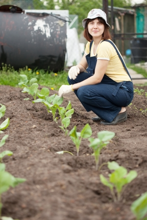 Female gardener planting cabbage spouts in ground photo