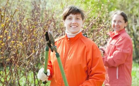 Two women cutting shrubbery at garden photo